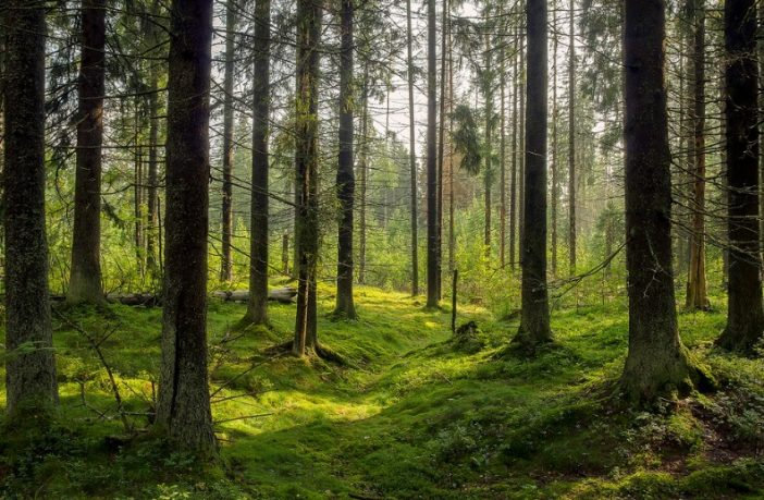 healthy forest environment with trees and leaves